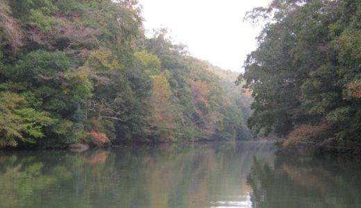 秋のバス釣り攻略法!ベイトフィッシュに注目せよ!