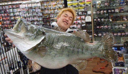 ブラックバス世界記録は一体何kg!?え?釣ったの日本人?